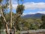 Australia Day Seventeen Tasmania Hobart Botanical Garden hike