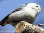 Birds at feeders and hikes April 5 2015