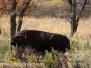 Sully's Hill Buffalo Ocober 15 2015