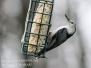 Backyard bird feeders may 3 2016