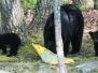 Bears may 27 2016