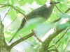 birds -052