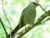birds -054