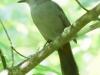birds -056