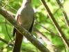 birds -062