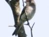 birds -221