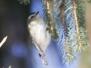 Lehigh Canal Weissport birds January 1 2018