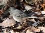 Lehigh Gap hike birds February 3 2018
