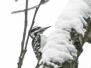 PPL Wetlands birds December 10 2017