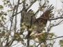 PPL Wetlands birds May 14 2017