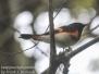 PPL Wetlands birds May 6 2017