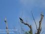 PPL Wetlands crow July 10 2016