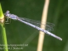 PPL Wetlands dragonflies -086