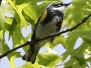 Rail to trails birds may 28 2017