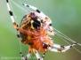 Spiders macro walk September 10 2016