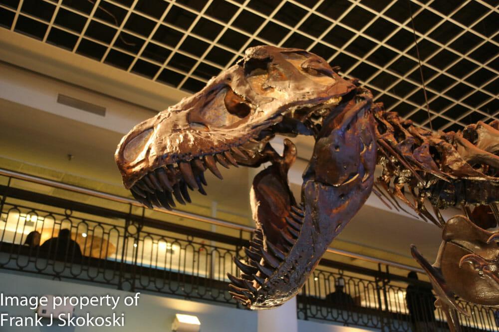 Academy Of Natural History Philadelphia Address