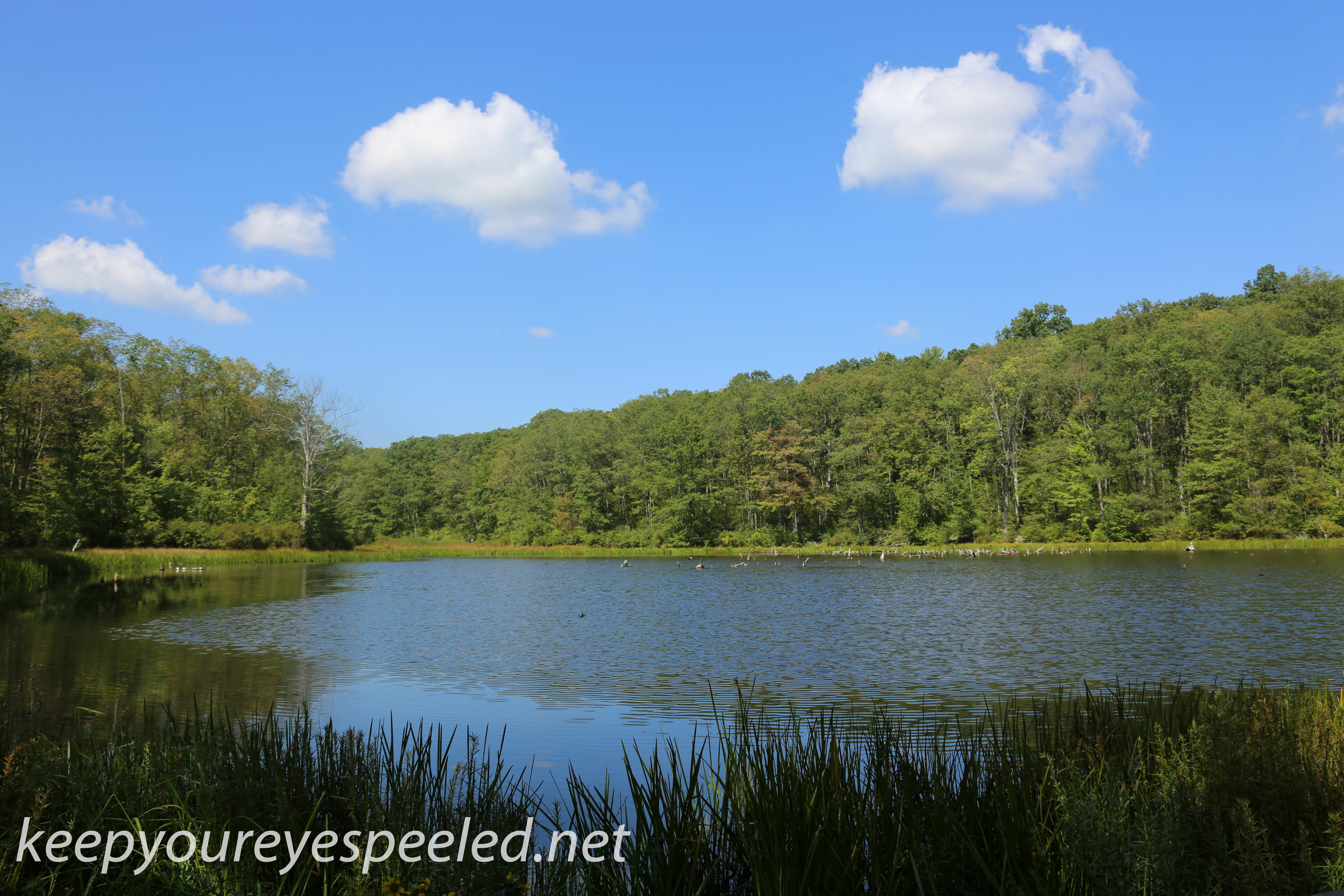 Late Summer Heat In Nescopeck State Park Keep Your Eyes