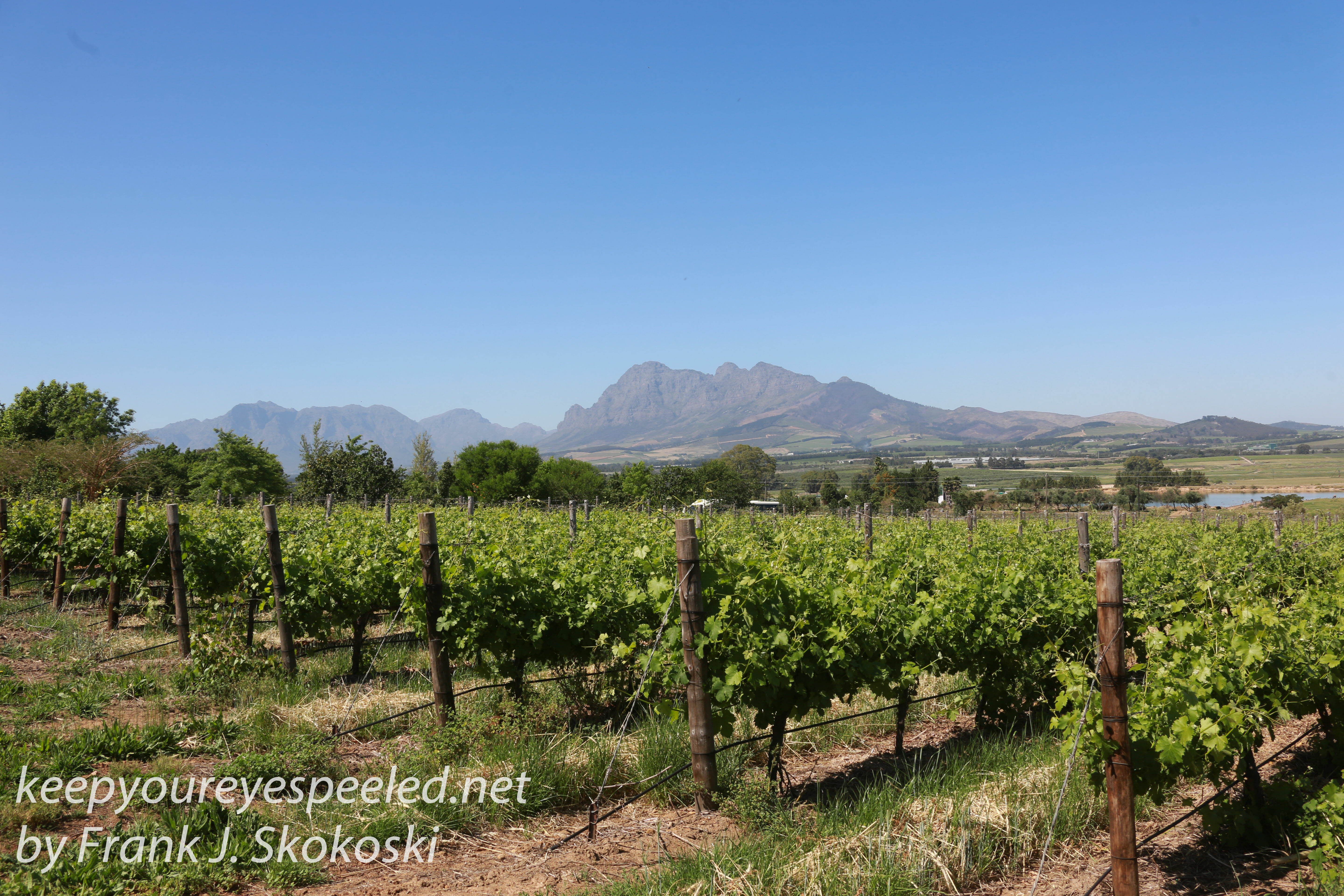South africa wine country drive 7 keep your eyes peeled for Jardin winery south africa